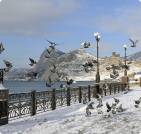 Сезонное жилье в  Береговом